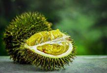 Durianfrucht
